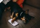 4-consigli-per-fare-pet-personal-branding
